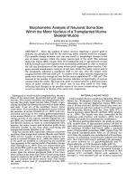 Morphometric analysis of neuronal soma size within the motor nucleus of a transplanted murine skeletal muscle.