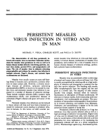 Persistent measles virus infection in vitro and in man.