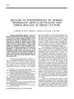 Release of Pyrophosphate by Normal Mammalian Articular Hyaline and Fibrocartilage in Organ Culture.