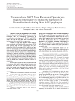 Transmembrane BAFF from rheumatoid synoviocytes requires interleukin-6 to induce the expression of recombination-activating gene in B lymphocytes.