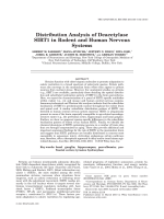 Distribution Analysis of Deacetylase SIRT1 in Rodent and Human Nervous Systems.