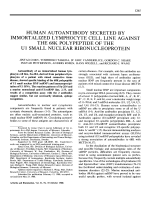 Human autoantibody secreted by immortalized lymphocyte cell line against the 68k polypeptide of the u1 small nuclear ribonucleoprotein.