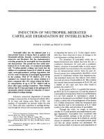 Induction of neutrophil-mediated cartilage degradation by interleukin-8.