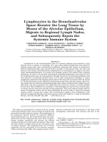 Lymphocytes in the bronchoalveolar space reenter the lung tissue by means of the alveolar epithelium  migrate to regional lymph nodes  and subsequently rejoin the systemic immune system.