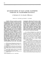 Quantitation of rat liver xanthine oxidase by radioimmunoassay. A mechanism for sex-specific differences