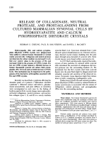 Release of Collagenase Neutral Protease and Prostaglandins From Cultured Mammalian Synovial Cells by Hydroxyapatite and Calcium Pyrophosphate Dihydrate Crystals.