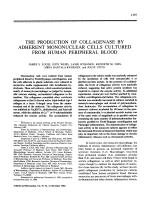 The production of collagenase by adherent mononuclear cells cultured from human peripheral blood.