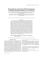 Timetable for Upper Eyelid Development in Staged Human Embryos and Fetuses.