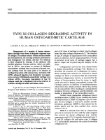 Type XI collagen-degrading activity in human osteoarthritic cartilage.