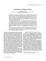 Development of adipose tissues.