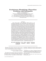Evolutionary Morphology  Platyrrhine Evolution  and Systematics.