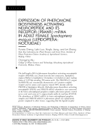Expression of pheromone biosynthesis activating neuropeptide and its receptor PBANR mRNA in adult female Spodoptera exigua LepidopteraNoctuidae.