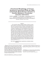 Functional morphology of venous structures associated with the male and female reproductive systems in Florida manatees (Trichechus manatus latirostris).