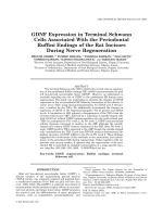 GDNF Expression in Terminal Schwann Cells Associated With the Periodontal Ruffini Endings of the Rat Incisors During Nerve Regeneration.