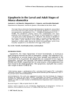 Lipophorin in the larval and adult stages of Musca domestica.