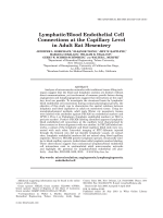 LymphaticBlood Endothelial Cell Connections at the Capillary Level in Adult Rat Mesentery.