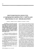 Phytomitogen-induced lymphokine-mediated cartilage proteoglycan degradation.