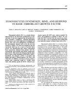 Synoviocytes synthesize bind and respond to basic fibroblast growth factor.