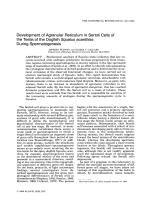 Development of agranular reticulum in Sertoli cells of the testis of the dogfish Squalus acanthias during spermatogenesis.