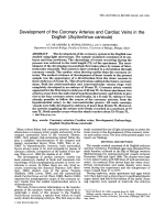 Development of the coronary arteries and cardiac veins in the dogfish (Scyliorhinus canicula).