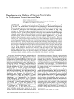 Developmental history of nervus terminalis in embryos of insectivorous bats.