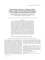 Distribution Pattern of Muscle Fiber Types in the Perivertebral Musculature of Two Different Sized Species of Mice.