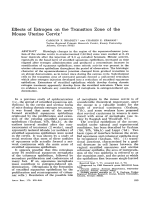 Effects of estrogen on the transition zone of the mouse uterine cervix.