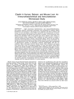 Elastin in human baboon and mouse liverAn immunohistochemical and immunoelectron microscopic study.