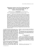 Endocytotic activity of the free floating cells and epithelial cells in the endolymphatic sacAn electron microscopic study.