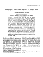 Heterogeneous distribution of dopamine D2 receptor mRNA in the rat striatumA quantitative analysis with in situ hybridization histochemistry.
