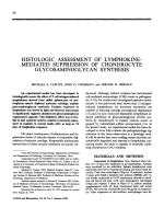 Histologic assessment of lymphokine-mediated suppression of chondrocyte glycosaminoglycan synthesis.