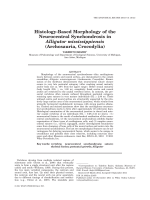 Histology-Based Morphology of the Neurocentral Synchondrosis in Alligator Mississippiensis (Archosauria  Crocodylia).