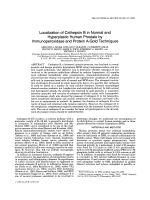 Localization of cathepsin B in normal and hyperplastic human prostate by immunoperoxidase and protein A-gold techniques.