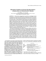 Membrane systems of guinea pig myocardiumUltrastructure and morphometric studies.