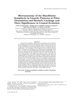 Microanatomy of the Mandibular Symphysis in LizardsPatterns in Fiber Orientation and Meckel's Cartilage and Their Significance in Cranial Evolution.