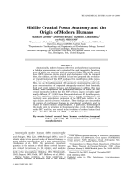 Middle Cranial Fossa Anatomy and the Origin of Modern Humans.
