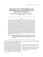 Molecular basis of endothelial cell morphogenesis in three-dimensional extracellular matrices.