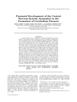 Postnatal Development of the Central Nervous SystemAnomalies in the Formation of Cerebellum Fissures.