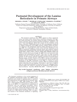 Postnatal Development of the Lamina Reticularis in Primate Airways.