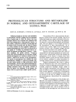 Proteoglycan Structure and Metabolism in Normal and Osteoarthritic Cartilage of Guinea Pigs.