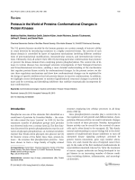 Proteus in the World of ProteinsConformational Changes in Protein Kinases.