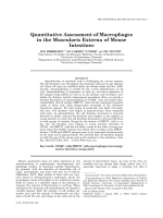 Quantitative Assessment of Macrophages in the Muscularis Externa of Mouse Intestines.