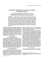 Quantitative morphology of the nervous systemExpanding horizons.