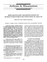 Rheumatologic manifestations of human parvovirus B19 infection in adults. Initial Two-Year Clinical Experience