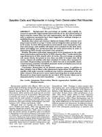 Satellite cells and myonuclei in long-term denervated rat muscles.
