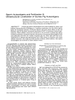 Sperm autoantigens and fertilization. III. Ultrastructural localization of guinea pig autoantigens