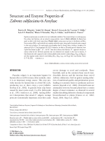 Structure and enzyme properties of Zabrotes subfasciatus ╬▒-amylase.
