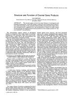 Structure and function of enamel gene products.