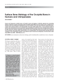Surface bone histology of the occipital bone in humans and chimpanzees.