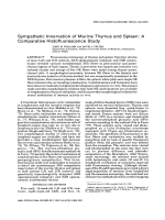 Sympathetic innervation of murine thymus and spleenA comparative histofluorescence study.